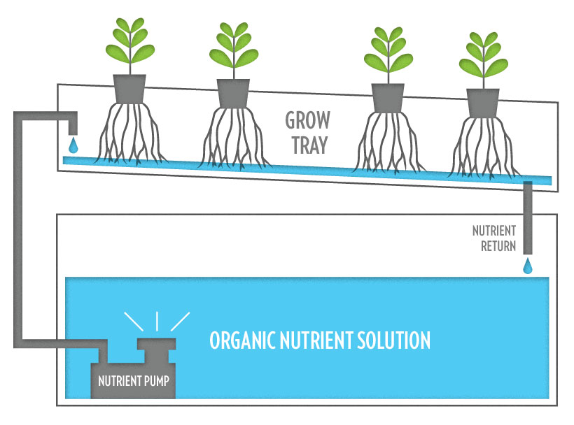 hydroponic-infographic